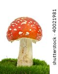 Fly Agaric  Amanita Muscaria ...