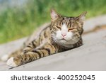 Tabby Cat Lounging On The...