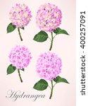 Set Of Hydrangea Flowers