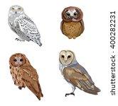 Owl Illustration Birds  Set...