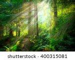 Magical Deep Foggy Forest. Par...