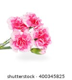 Pink Carnations Flower Isolate...
