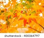 orange color maple leaves in...   Shutterstock . vector #400364797