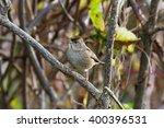 golden crowned sparrow  close... | Shutterstock . vector #400396531
