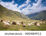 Herd Of Sheep Grazing Near...
