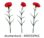 Carnations Flowers Isolated On...