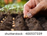 Farmer's Hand Planting Seed In...
