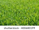 green grass   Shutterstock . vector #400680199