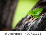 plant growing on wood young... | Shutterstock . vector #400711111