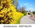 Forsythia(Golden bell flowers) in spring at Tikkurila park and train in background, Finland