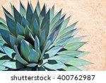 Portrait Of Agave On Arid Soil