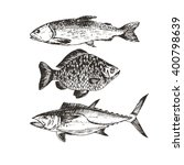 vector hand drawn fish   salmon ... | Shutterstock .eps vector #400798639