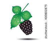 colorful blackberry summer... | Shutterstock .eps vector #400802875