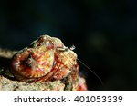 Small photo of actinium animal underwater photo