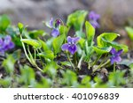 Closeup Purple Flowers ...