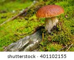 Boletus Edulis Is Edible...