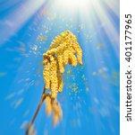 flying hazelnut pollen in spring | Shutterstock . vector #401177965