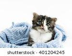 Stock photo cute cat 401204245