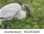 The Wood Stork Is A Large  Bal...