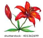 red tiger lily flower blossom....   Shutterstock . vector #401362699