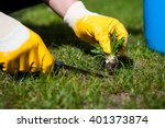 Man removes weeds from the lawn / cutting out weeds   - stock photo