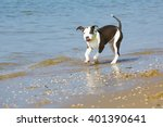 Dog Playing And Walking At The...
