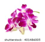 Stock photo beautiful purple dendrobium orchid flowers isolated on white background 401486005