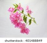 Colorful Bougainvillea Flower...