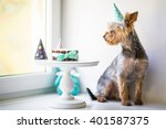 york dog in eats a small... | Shutterstock . vector #401587375