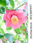 camellia | Shutterstock . vector #401589997