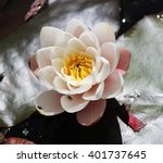 A Lone Water Lily On A Pond In...