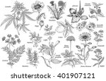 Set Of Vector Medicinal Herbs ...