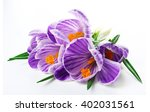 Beautiful Crocus Flowers...