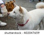 shiba dog | Shutterstock . vector #402047659