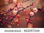 beautiful flowering japanese... | Shutterstock . vector #402057244