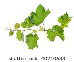 branch of grape vine on white... | Shutterstock . vector #40210633
