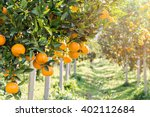 ripe and fresh oranges hanging... | Shutterstock . vector #402112684