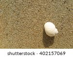 fossil shell on the sand beach  ... | Shutterstock . vector #402157069