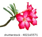Stock photo red azalea flowers on white 402165571