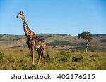 Single Giraffe In The Middle O...