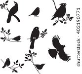 Bird Silhouettes  Vector...