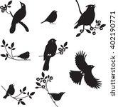 Bird Silhouettes  Vector...
