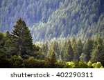 forest of green pine trees on... | Shutterstock . vector #402290311