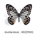 Pathysa  Paranticopsis ...