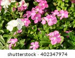 pink and white flower | Shutterstock . vector #402347974