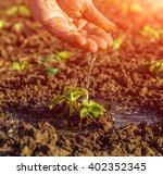 hand of old farmer watering... | Shutterstock . vector #402352345