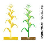corn plant with leaves and... | Shutterstock .eps vector #402368551