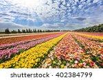 flower kibbutz near gaza strip. ... | Shutterstock . vector #402384799