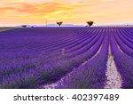 lavender field summer sunset... | Shutterstock . vector #402397489