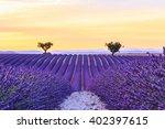 beautiful sunset lavender field ... | Shutterstock . vector #402397615